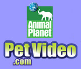 petvideo Animal Planets Petfinder.com announces Launch of adoptable pet videos
